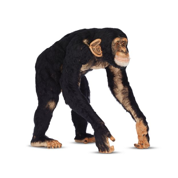 Photo 9 from A Pet Chimp