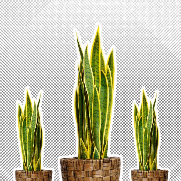 Snake Plant Care Tips For Taking Care Of Snake Plants