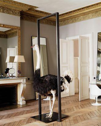 David Mallett's salon.