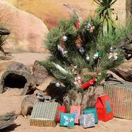 Meercats (Suricata suricatta) investigat