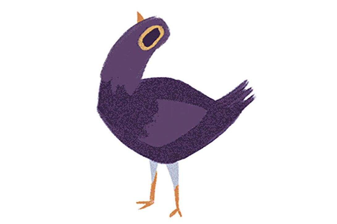 What is trash dove the purple facebook comment sticker bird the purple facebook comment sticker bird buycottarizona
