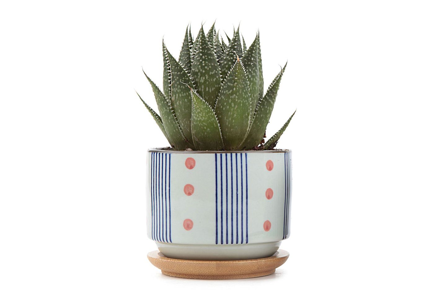 3 Inch Ceramic Plant Pot At