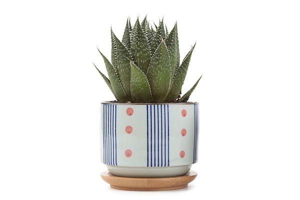 3-Inch Ceramic Plant Pot