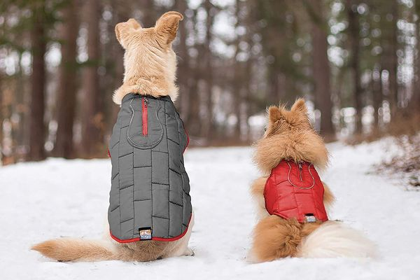 The Best Dog Coats on Amazon, According to Reviewers