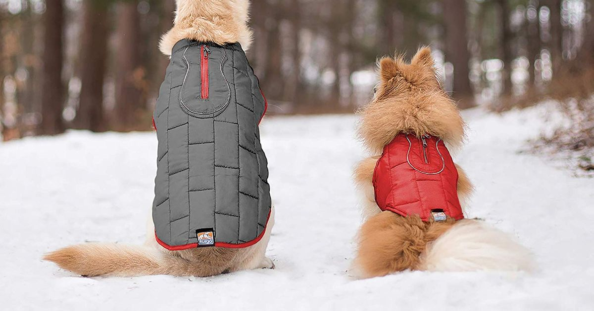 d83f679cef6 10 Best Dog Coats 2019