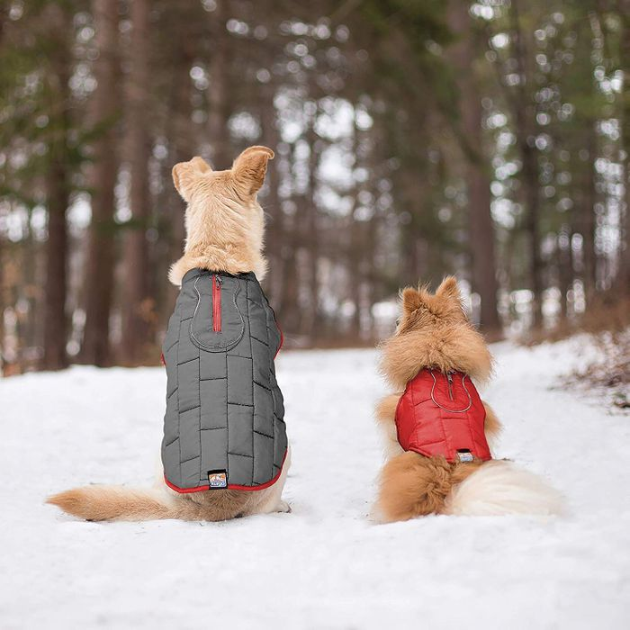 7a417e87cb4 The Best Dog Coats on Amazon, According to Hyperenthusiastic Reviewers