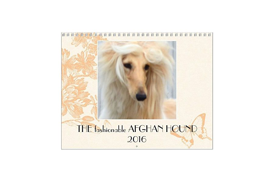 The Fashionable Afghan Hound 2016 Wall Calendar
