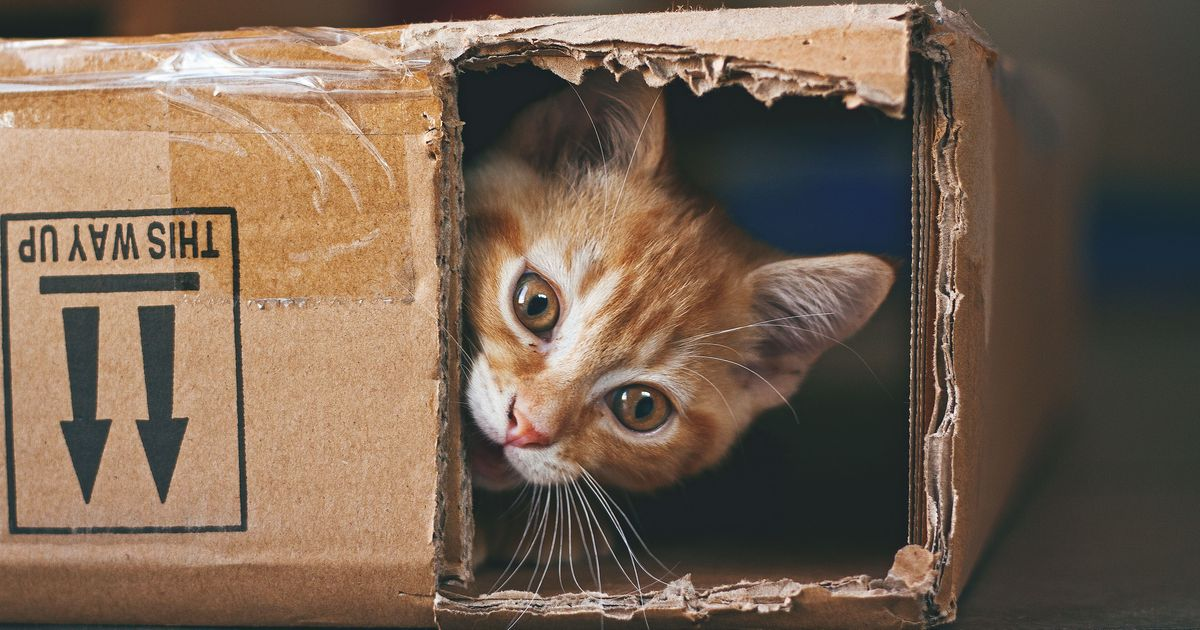 Here's Why Your Cat Loves Crawling Into Small Spaces