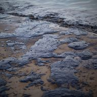 Ruptured Pipeline Spills Oil Along Santa Barbara Coast