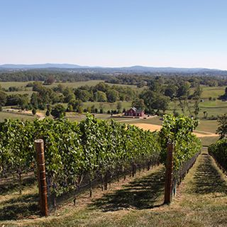 Drink and Dine in Virginia's Piedmont Region