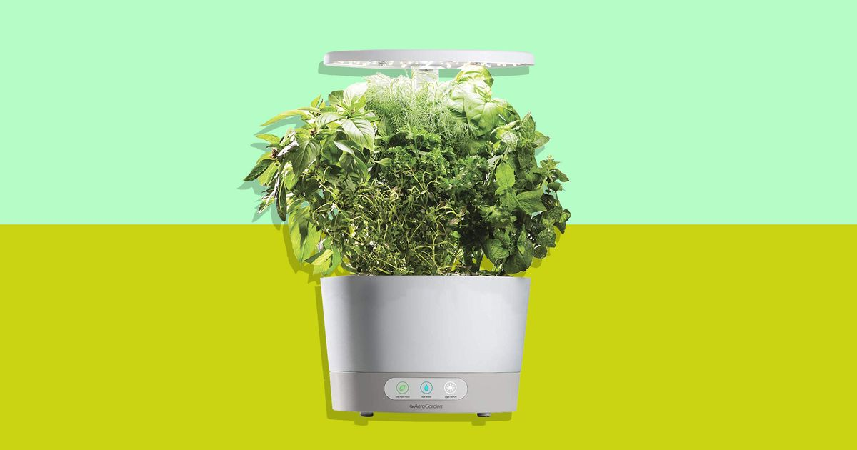 This Soil-Free Herb Garden for Dummies Is Half Off