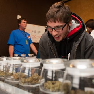 DENVER, CO - JANUARY 1: Tyler Williams of Blanchester, Ohio selects marijuana strains to purchase at the 3-D Denver Discrete Dispensary on January 1, 2014 in Denver, Colorado. Legalization of recreational marijuana sales in the state went into effect at 8am this morning. (Photo by Theo Stroomer/Getty Images)