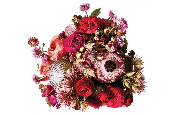 King protea, strawflower, cornflower, blushing bride, ranunculus, blackberry vine, and Romantic Antique, Darcy, and Red Piano garden roses
