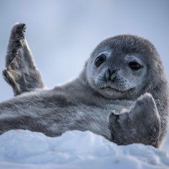 "The seal says, ""Keep six feet away!"""