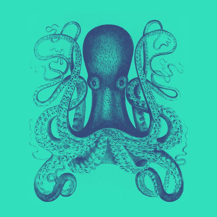 Whats It Like To Be An Octopus Science Of Us