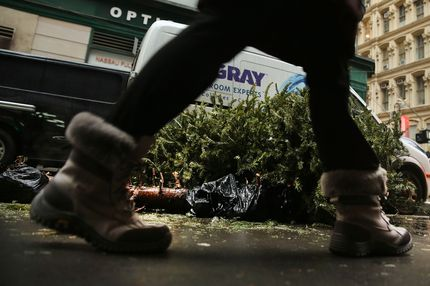 A person passes discarded Christmas trees along a sidewalk on January 14, 2014 in New York City.