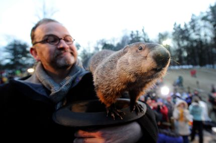 Groundhog handler Ben Hughes watches Punxsutawney Phil after he did not see his shadow predicting an early spring during the 125th annual Groundhog Day festivities on February 2, 2011 in Punxsutawney, Pennsylvania.