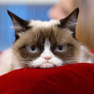 "TODAY -- Pictured: Grumpy Cat appears on NBC News' ""Today"" show -- (Photo by: Peter Kramer/NBC/NBC NewsWire)"