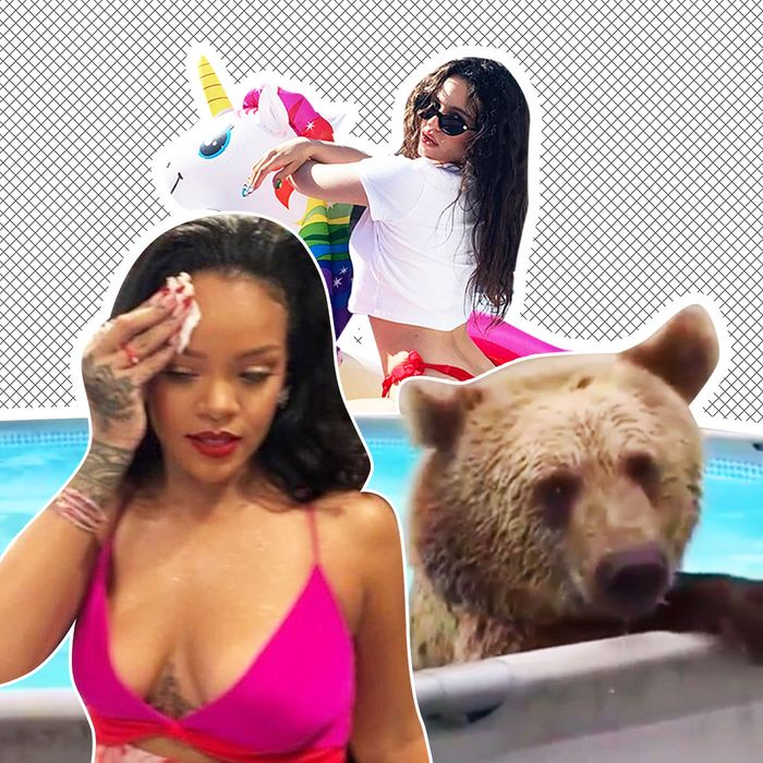 Rihanna, Rosalía, a hot bear.