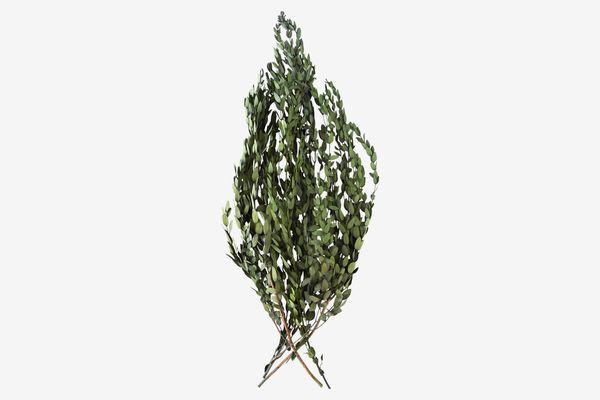 Terrain Preserved Parvifolia Bunch
