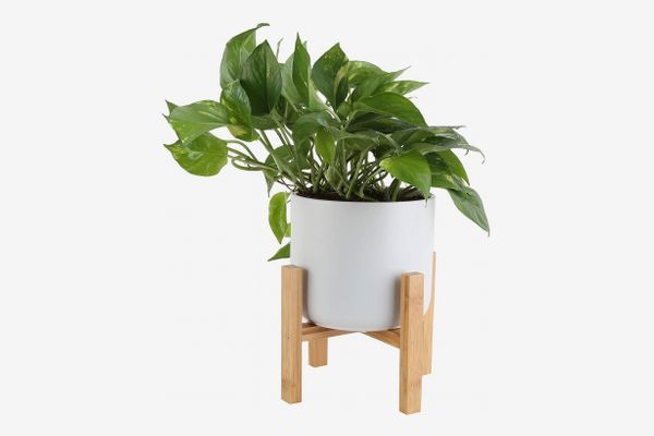 Golden Pothos in 6.5-Inch Mid-Century Planter With Plant Stand