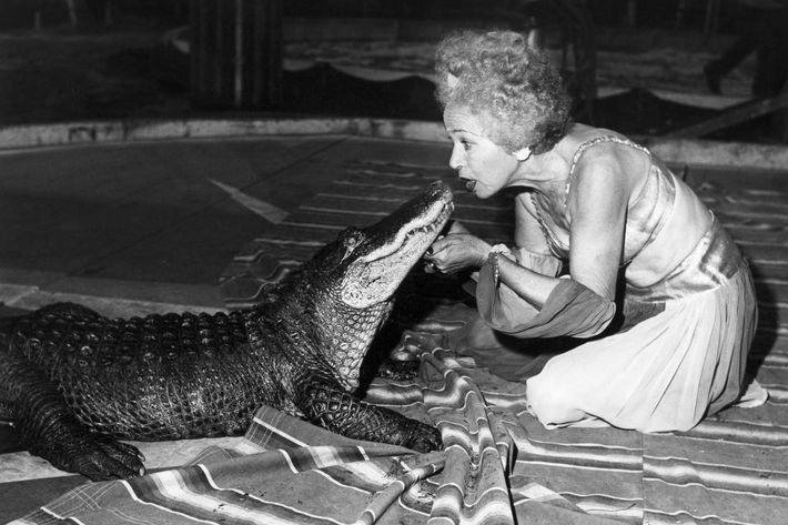 alligator jewish single women Encyclopedia of jewish and  obligation of women to perform the commandments  responsibility of the jewish people and once a woman or.