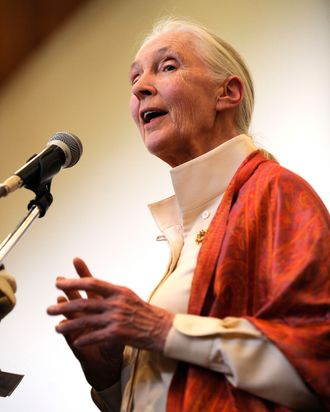 British primatologist Dr Jane Goodall delivers a speech during a presentation at the National Museum on January 26, 2013 in Nairobi. The Great Apes Survival Partnership [GRASP] ambassador Dr. Goodall gave a presentation on