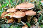 Mushroom Spores Are Going to Save the Planet