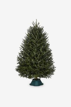 7-8-Foot Fraser-Fir Real Christmas Tree