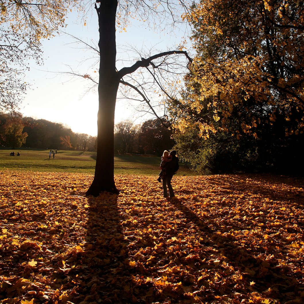 A mother and daughter walk through a field of fallen leaves in Prospect Park, Brooklyn.