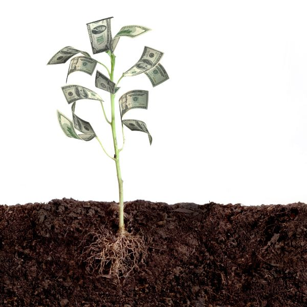 Just plant the seed ...