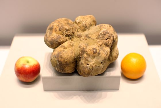 http://www.grubstreet.com/2014/12/worlds-largest-truffle-sold-at-auction.html?mid=facebook_nymag